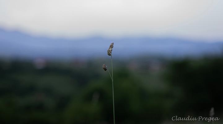 3-zile-de-poveste-Tura-Foto-by-Atelierele-ILBAH-24