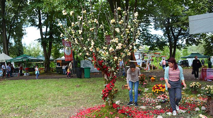 Atelierele-ILBAH–Aranjamente-florale-spectaculoase-la-Ziua-Rozelor-2018-2
